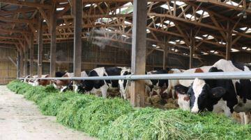 Les 9 commandements pour des vaches bien dans leur bâtiment