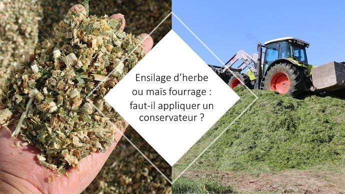 Ensilage de maïs ou d'herbe