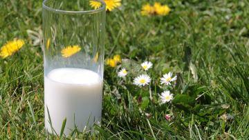 Les éleveurs laitiers craignent un écrémage des prix