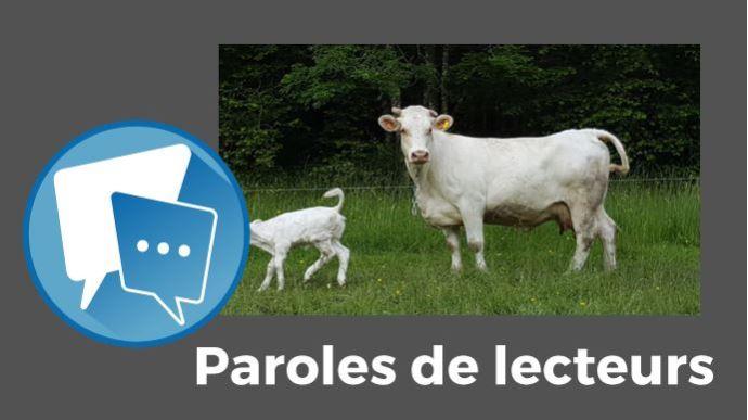les lecteurs de web agri pas etonnes de la decapitalisation du cheptel allaitant francais