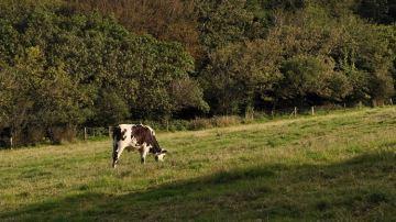 Les conseils du Gnis sur la façon d'exploiter l'herbe au pâturage