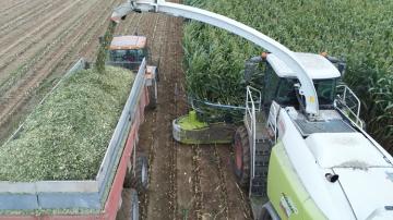 Un maïs 2020 relativement correct mais moins lactogène que l'an dernier