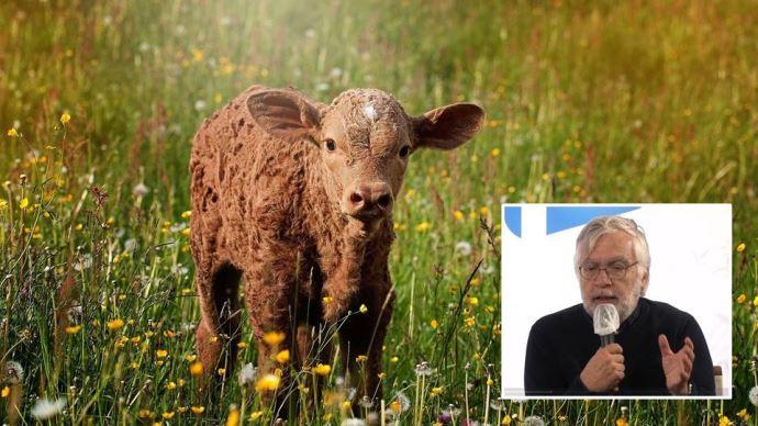 La Pac peut favoriser l'adaptation des productions animales européennes aux enjeux économiques et environnementaux actuels