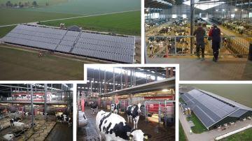 Sur la ferme Lansink (Allemagne) : 16 robots Lely pour traire 900 vaches