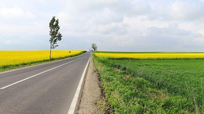 Colza et route