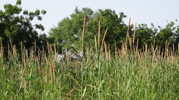 L'accès aux terres agricoles dans le monde est de plus en plus inégal, indique l'ILC