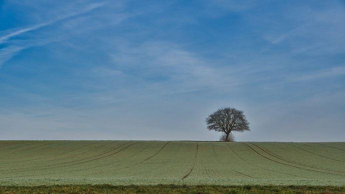 Les céréales françaises profitent d'un climat favorable