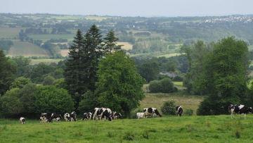 Les éleveurs bovins en route pour baisser de 15 à 20% leurs émissions de GES