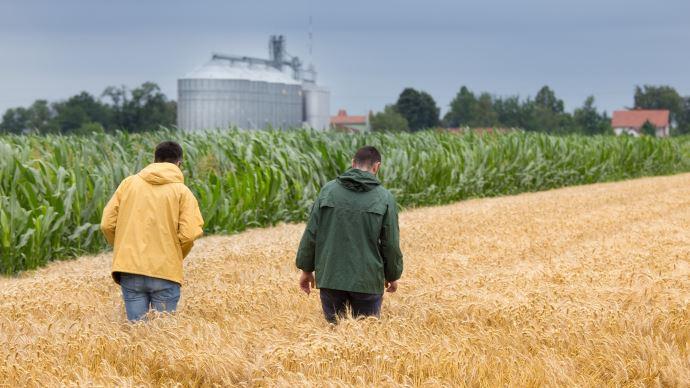 Cultures de blé, maïs et silos de stockage