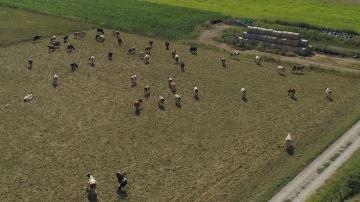 «Polyculture-élevage: le système d'avenir»