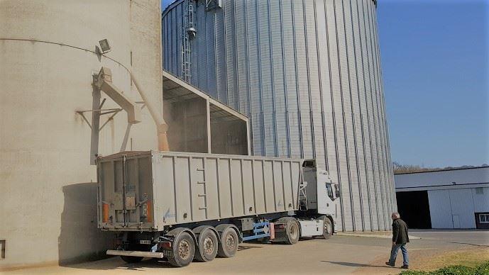Les cours du blé et du maïs restent hauts, soutenus par la demande et les baisses de productions