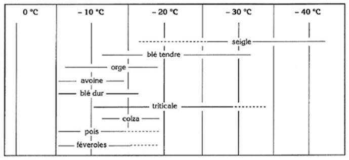 Niveaux maxima de résistances au froid et variabilité génétique chez différentes espèces