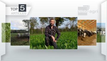 Le choix du maïs fourrage, question cruciale de cette semaine