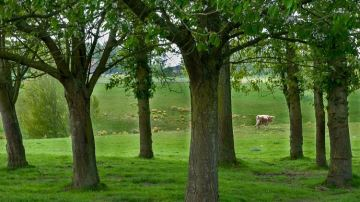 Rendement, valeur alimentaire: l'impact de l'arbre sur la production d'herbe