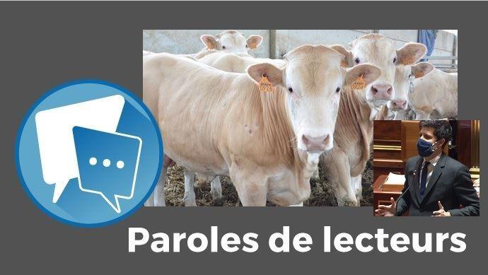 paroles de lecteurs web agri viande de jeune bovin dans les cantines scolaires