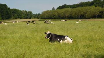 «Comment l'agriculture stocke du carbone», expliqué au grand public