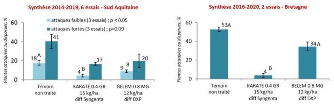 Protection contre les taupins - Synthèse d'essais maïs grain et maïs fourrage