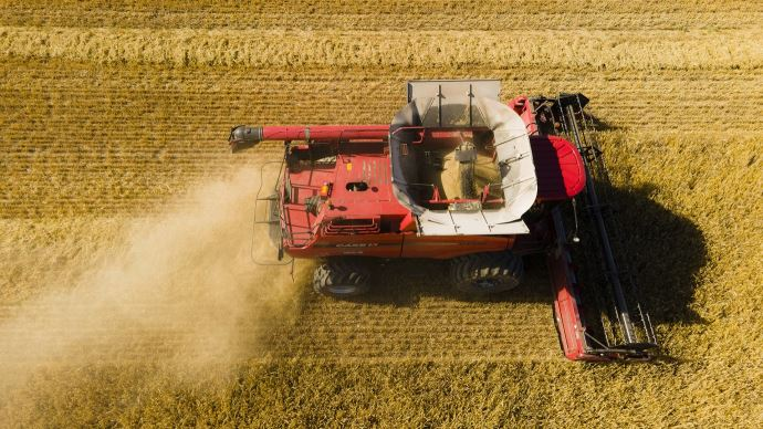 De nouveaux records de production de céréales pourraient s'enchaîner dans les prochaines années, selon le Conseil international des céréales.