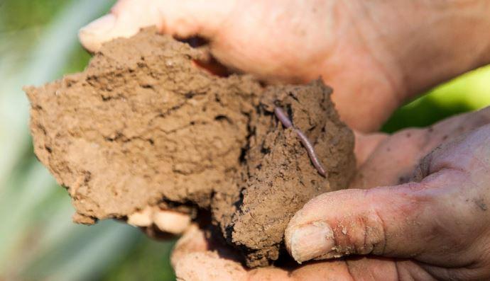 Motte de terre