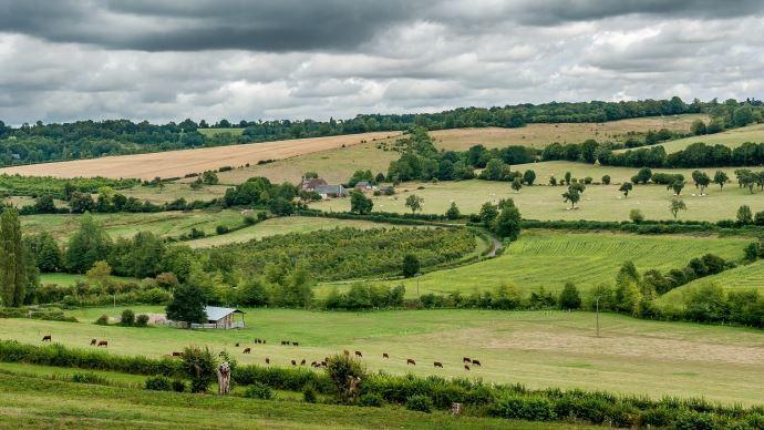 paysage champs