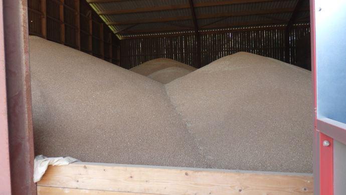 Cours du blé à la baisse