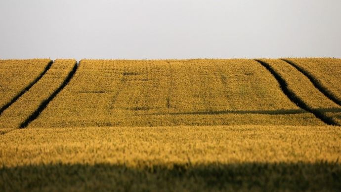 Plaines de blé