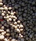 Les agriculteurs face à des prix qui reflètent ceux des matières premières