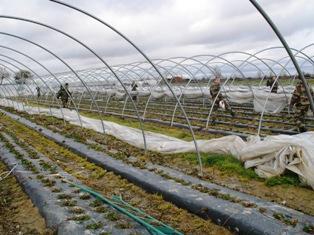 Les risques assurables exclus du régime d'indemnisation du Fonds national de garantie des calamités agricoles