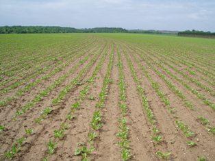Point règlementaire sur les herbicides