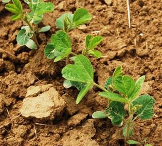 """Une conférence internationale sur """"la culture responsable du soja au Brésil"""""""