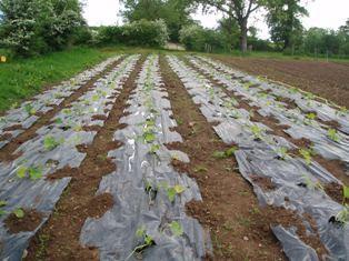 Les producteurs de légumes se mobilisent