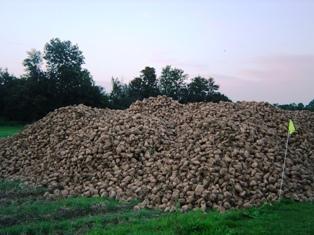 Une récolte attendue de 33 millions de tonnes dans un marché très porteur
