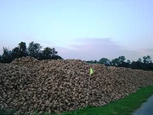 L'Union exporte 500.000 t de sucre non subventionnées hors quota Omc