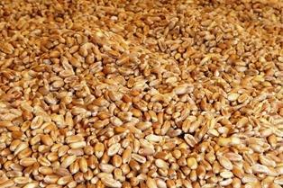 Blé, soja et maïs quasi stables, freinés par la baisse de la Bourse