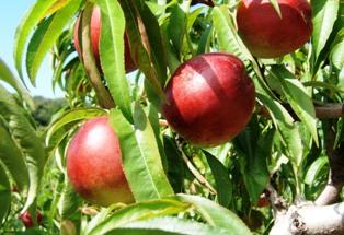 Un accord passé avec la Russie facilitera les exportations européennes de fruits et de légumes