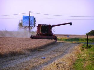 Des productions moins abondantes tirent les cours des céréales
