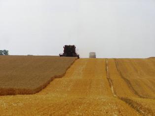 Les récoltes menacées par une nouvelle sécheresse en Amérique du Sud