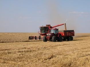 La volatilité du prix du blé met en péril les industries de transformation
