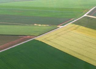 Chicago : le blé grimpe en raison de la mauvaise qualité des cultures aux Usa