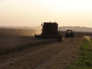 Fort rebond du soja et du maïs après leur chute de fin de semaine