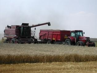 Soja et blé se replient, la météo pourrait s'améliorer