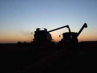 Le maïs se replie après un sommet depuis l'été 2008