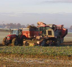 Bruxelles envisage de mettre plus de sucre sur le marché européen