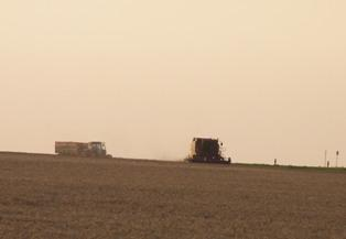 Le blé et le maïs au plus haut depuis l'été 2008