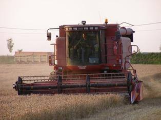 Très fort rebond pour le blé, le maïs et le soja