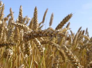 La sécheresse persiste et signe en France !