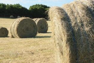 Le manque d'herbe estimé à 15 millions de tonnes de matière sèche