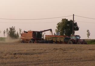 Rechute brutale pour le maïs, le blé et le soja