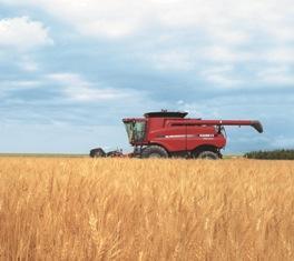 Les prix du blé et du maïs rebondissent, le soja reste ferme