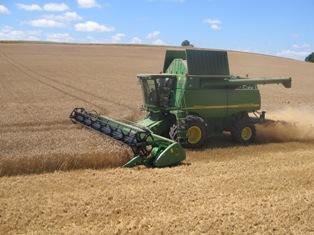 Rebond du maïs, du soja et du blé avec l'aide des autres marchés